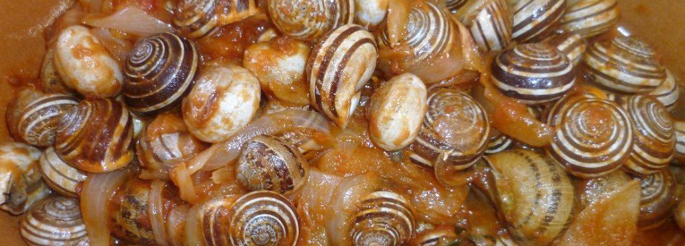 Lumache in Polpa di Pomodoro e Cipolle